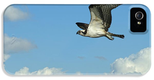 The Osprey 2 IPhone 5 Case by Ernie Echols
