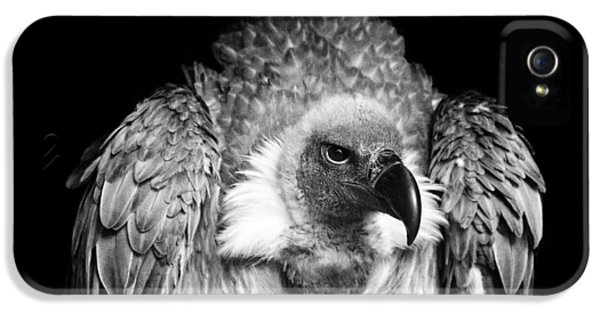 Vulture iPhone 5 Case - The Scavenger by Chris Whittle