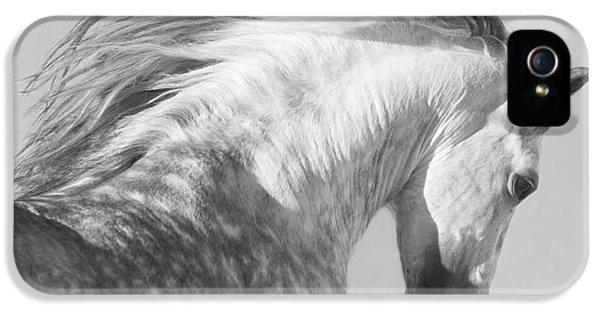 Horse iPhone 5 Case - The Spanish Stallion Tosses His Head by Carol Walker