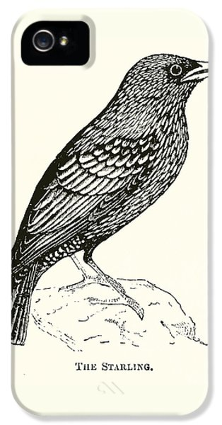 The Starling IPhone 5 Case by English School