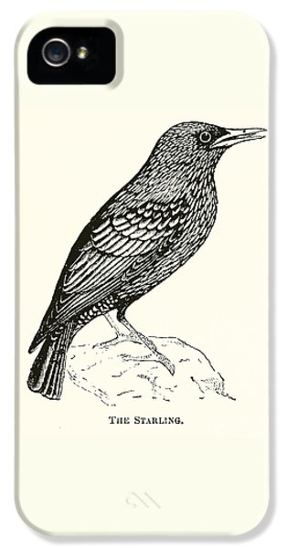Starlings iPhone 5 Case - The Starling by English School