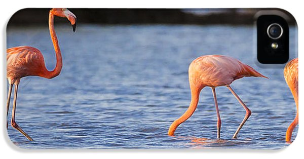 The Three Flamingos IPhone 5 Case by Adam Romanowicz