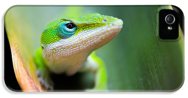 The Watching Eye IPhone 5 Case by Shelby  Young