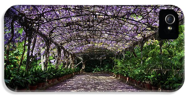 The Wisteria Arbour In Full Bloom IPhone 5 Case