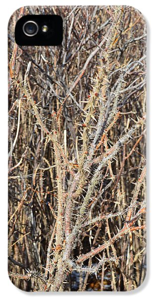 Thorny Wall IPhone 5 Case by Meandering Photography