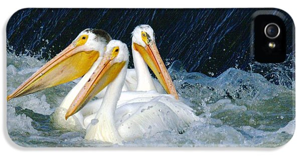 Three Buddies Hanging Out IPhone 5 Case by Jeff Swan