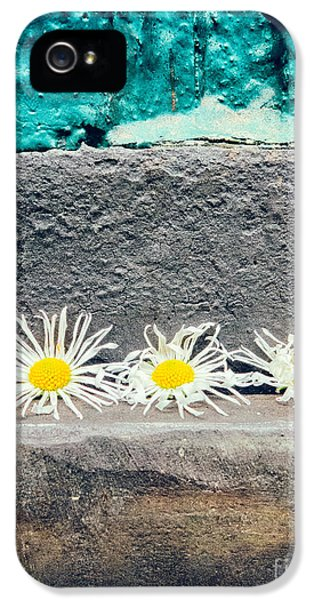 IPhone 5 Case featuring the photograph Three Daisies Stuck In A Door by Silvia Ganora
