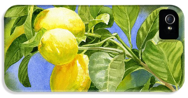 Lemon iPhone 5 Case - Three Lemons by Sharon Freeman