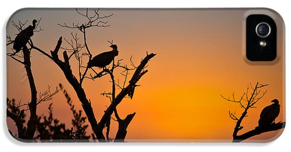 Vulture iPhone 5 Case - Three Vultures Waiting by Delphimages Photo Creations