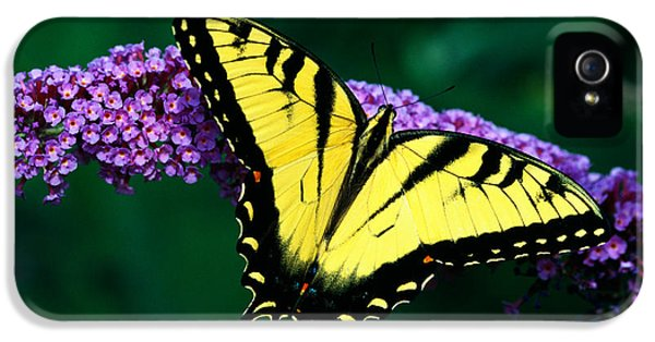 Tiger Swallowtail Butterfly On Blooming IPhone 5 Case by Panoramic Images
