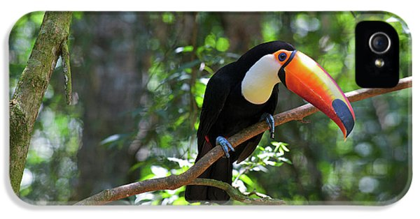 Toco Toucan (ramphastos Toco IPhone 5 / 5s Case by Andres Morya Hinojosa