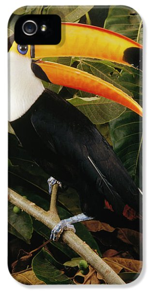 Toco Toucan Ramphastos Toco Calling IPhone 5 / 5s Case by Claus Meyer