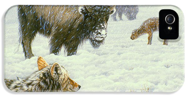 Buffalo iPhone 5 Case - Tough Day In May by Paul Krapf