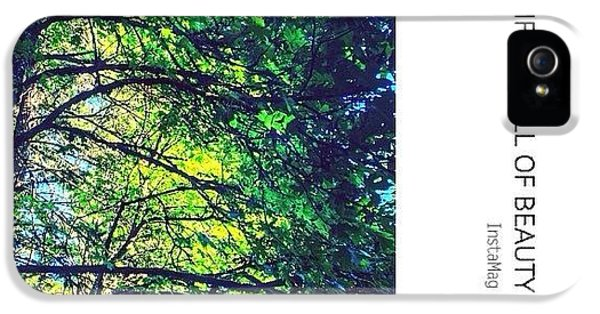 Sunny iPhone 5 Case - Tree Canopy From My Afternoon Walk by Anna Porter