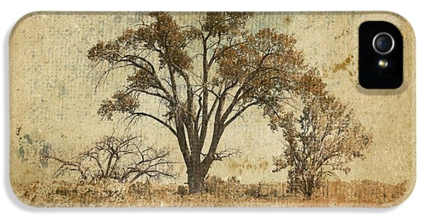 Trees In The Lowland IPhone 5 Case by Brett Pfister