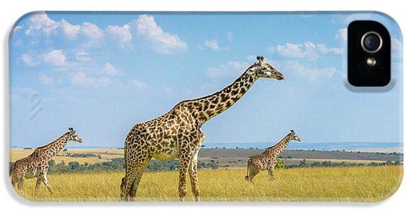 Trio Giraffes IPhone 5 Case