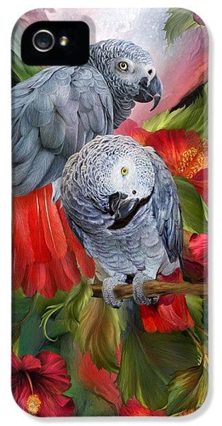 Tropic Spirits - African Greys IPhone 5 Case