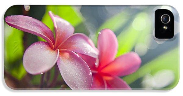 Plumeria Flower iPhone 5 Case - Tropical Heat by Sean Davey