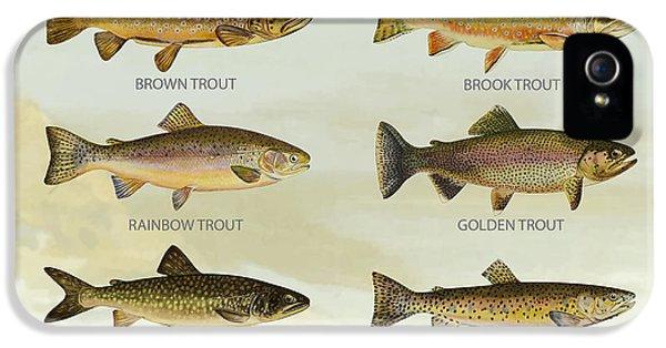 Trout Species IPhone 5 Case
