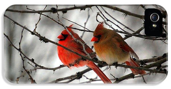 True Love Cardinal IPhone 5 Case