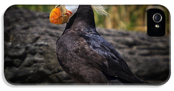 Tufted Puffin IPhone 5 / 5s Case by Mark Kiver