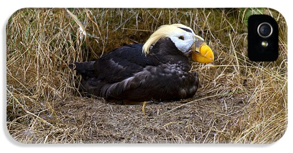Puffin iPhone 5 Case - Tufted Puffin by Mike  Dawson