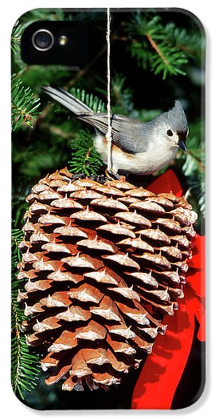 Titmouse iPhone 5 Case - Tufted Titmouse (baeolophus Bicolor by Richard and Susan Day