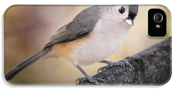 Tufted Titmouse IPhone 5 Case by Bill Wakeley