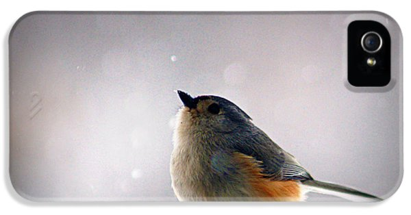 Tufted Titmouse IPhone 5 Case by Cricket Hackmann