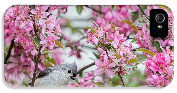 Tufted Titmouse In A Pear Tree Square IPhone 5 Case by Bill Wakeley