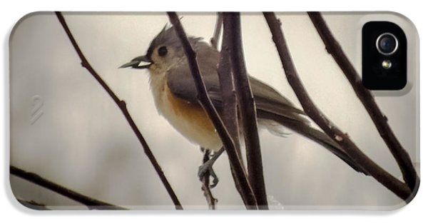 Tufted Titmouse IPhone 5 Case by Karen Wiles