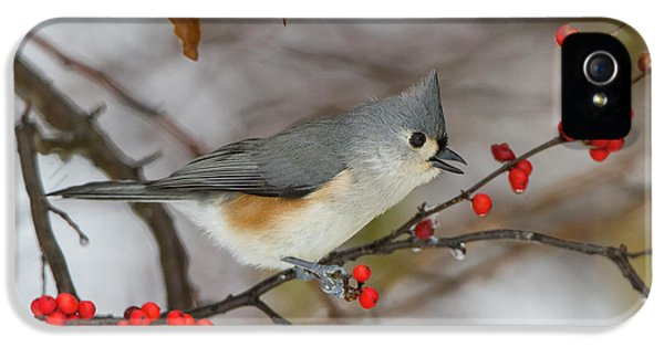 Titmouse iPhone 5 Case - Tufted Titmouse (parus Bicolor by Richard and Susan Day