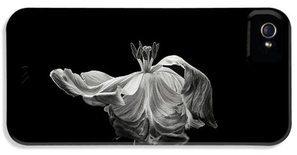 Tulip iPhone 5 Case - Tulip by Lotte Gr?nkj?r