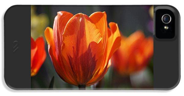 Tulip Prinses Irene IPhone 5 Case