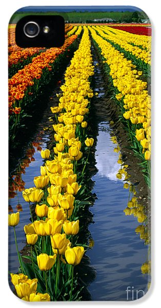 Tulip Reflections IPhone 5 Case