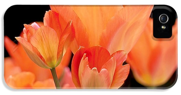Tulips In Shades Of Orange IPhone 5 Case by Rona Black