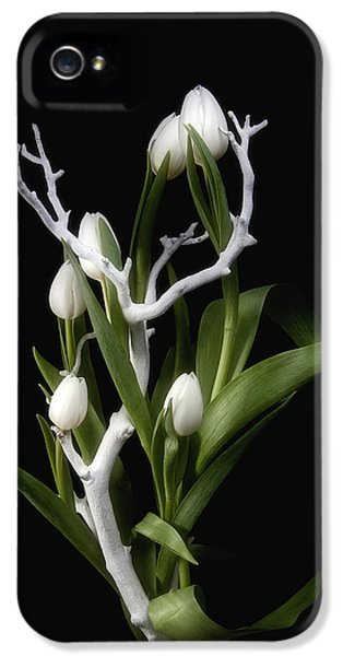 Tulips In Tree Branch Still Life IPhone 5 Case by Tom Mc Nemar
