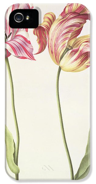 Tulips IPhone 5 / 5s Case by Nicolas Robert