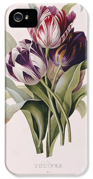 Tulips IPhone 5 / 5s Case by Pierre Joseph Redoute