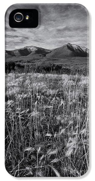 Tundra Summer IPhone 5 Case by Priska Wettstein