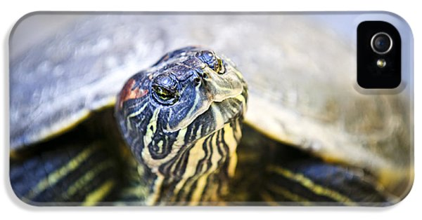 Turtle iPhone 5 Case - Turtle by Elena Elisseeva
