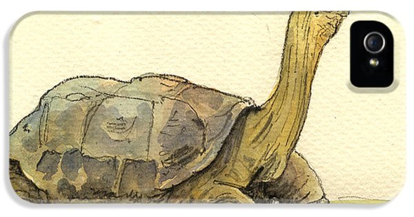 Turtle iPhone 5 Case - Turtle Galapagos by Juan  Bosco