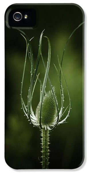 Twisting Beauty IPhone 5 Case
