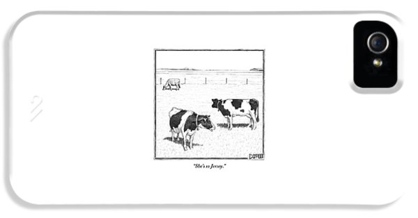 Two Spotted Cows Looking At A Jersey Cow IPhone 5 Case