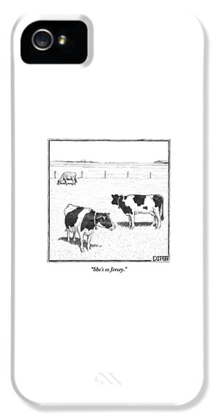 Rural Scenes iPhone 5 Case - Two Spotted Cows Looking At A Jersey Cow by Matthew Diffee