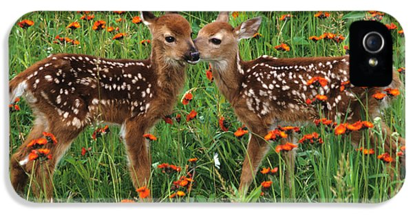 Two Fawns Talking IPhone 5 / 5s Case by Chris Scroggins