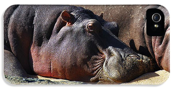 Two Hippos Sleeping On Riverbank IPhone 5 Case by Johan Swanepoel