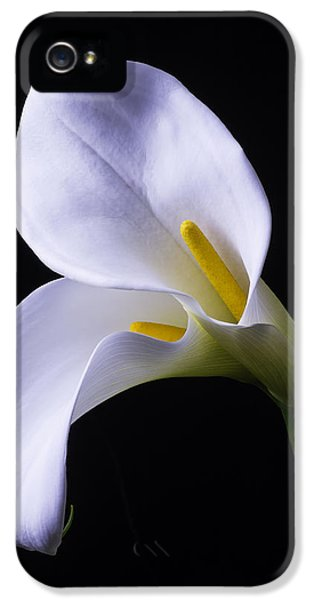 Lily iPhone 5 Case - Two In Love by Garry Gay