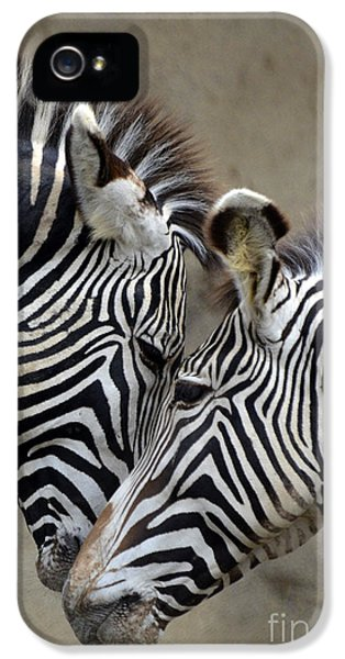 Two Zebras IPhone 5 Case by Mark Newman
