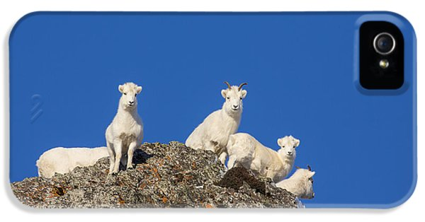 Sheep iPhone 5 Case - Under The Blues Skies Of Winter by Tim Grams